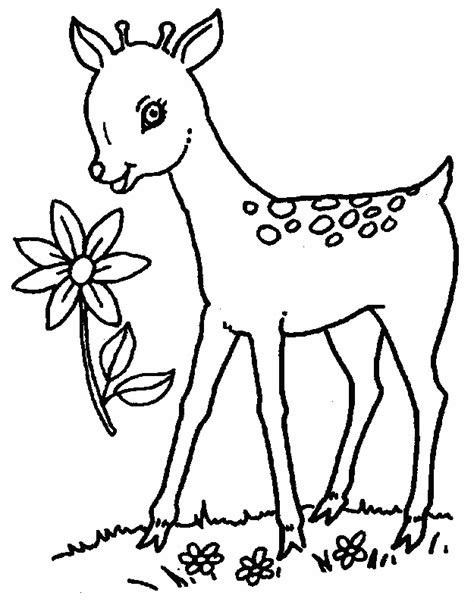 coloring book deer free coloring pages of deer and fawn