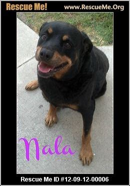 rottweiler rescue ca rottweiler rescue rottweilers and california on