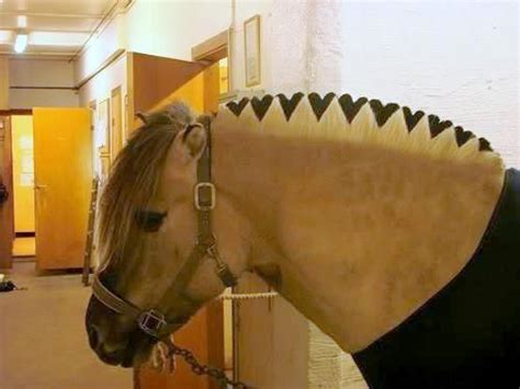 fjord mane designs fjord hearts horse mule power pinterest