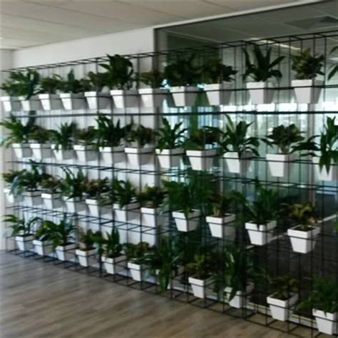 plants for wall gardens pot plant vertical garden tropical plant rentals