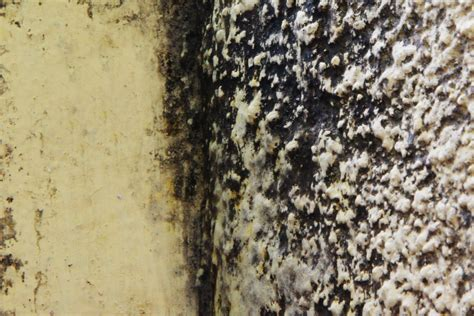 How To Prevent Mold In House by How To Prevent Mold Growth In Your Vacation Home 10 Steps