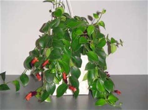 Incroyable Plantes D Interieur Retombantes #8: 220c1084640bbcac0fcae6acc3eedd18.jpg
