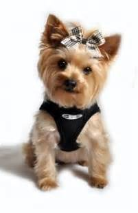 how to cut a yorkie poo s hair yorkie haircut styles pictures blog photos video pictures