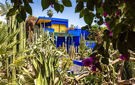 Home Interiors And Gifts by Visiter Le Jardin Majorelle 224 Marrakech Wild Birds