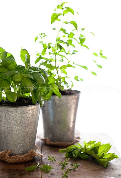 how to grow a herb garden how to grow your own indoor culinary herb garden simple
