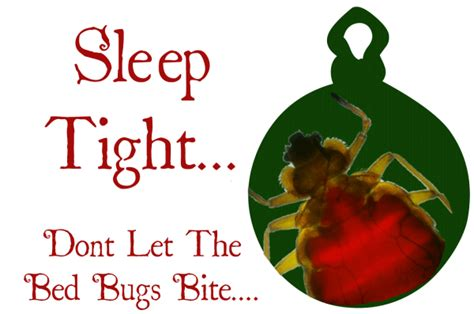 how to keep bed bugs away keeping bed bugs away simple tips to keeping bed bugs away
