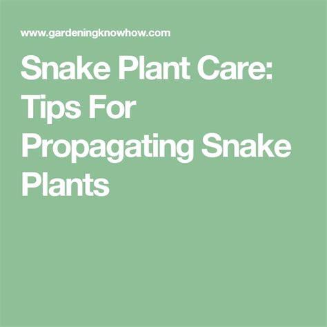 7 Techniques On Caring For A Python by Pi 249 Di 25 Fantastiche Idee Su Snake Plant Care Su