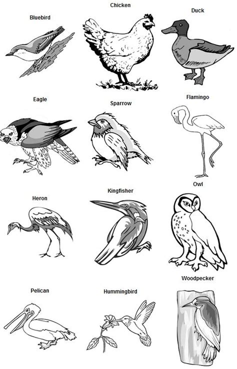 birds feet types
