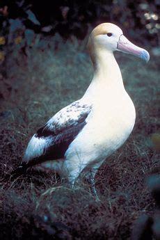albatross  world encyclopedia