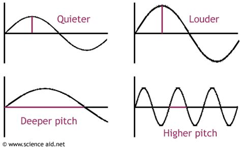 sound wave diagram the cellular scale cut your brain some slack