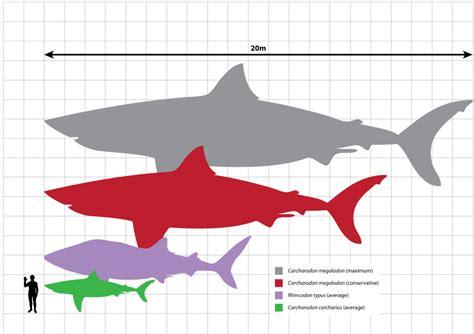 Megalodon Shark Size   shark week brings new sharks and live talk shows human