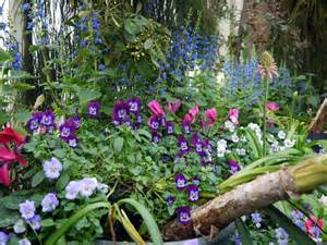 Garden Flowering Plants Cold Climate Gardening Growing Hardy Perennials In Cooler Regions