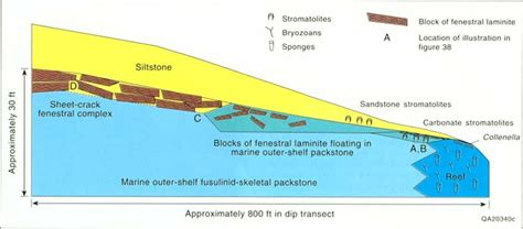 Outer Shelf by Bureau Of Economic Geology Guide To The Permian