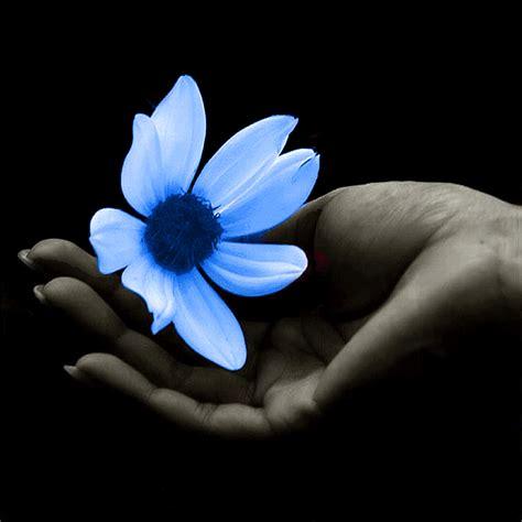 donare un fiore poesie 187 archive 187 un fiore da donare