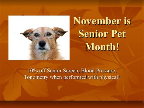 november  senior pet month