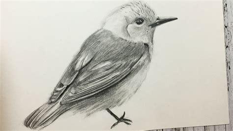 dibujos realistas materiales c 243 mo dibujar un p 225 jaro realista paso a paso f 225 cil y