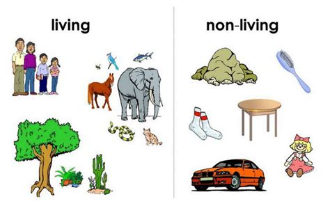 Living And Non Living Things Science Lessons And