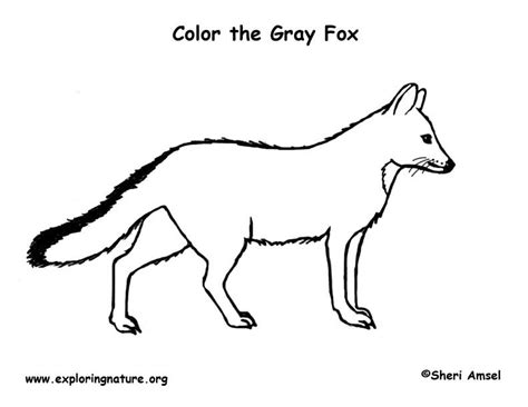 coloring page gray fox fox gray coloring page
