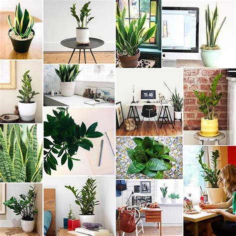 Best Desk Plant by Treat Yourself Our Favorite Desk Plants