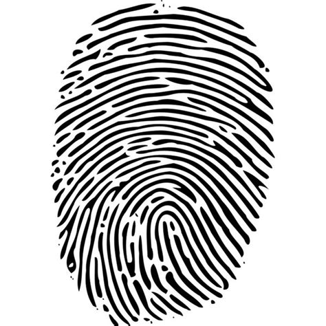 fingerprint template explaining biometric fingerprint identification and how it