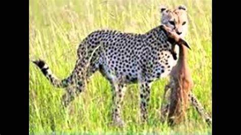 imagenes de animales carniboros animales carn 237 voros youtube
