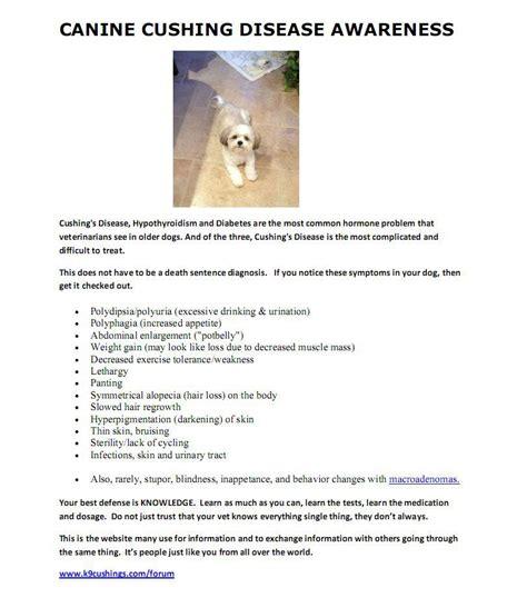 cushings disease with canine cushing s disease lincoln animal ambassadors