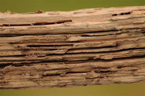 termite custom woodworks tips to help prevent termite damage in wood windows pella