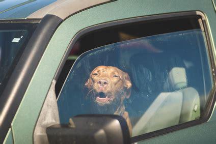 coup de chaleur quoi faire les troubles estivaux chez nos animaux de compagnie