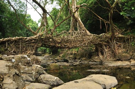 what is root bridge road less travelled bewitched by the beauty of rewai