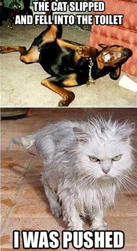 Wet Cat Meme - it was no accident