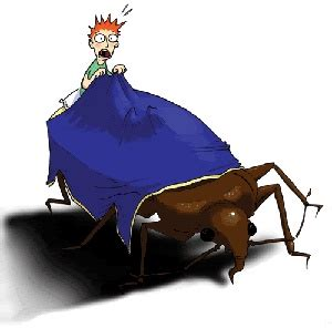 bed bug supplies 17 best ideas about bed bugs on pinterest bed bugs treatment dust mites and bed bug