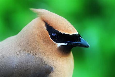 grouse mountain refuge for endangered wildlife ranger