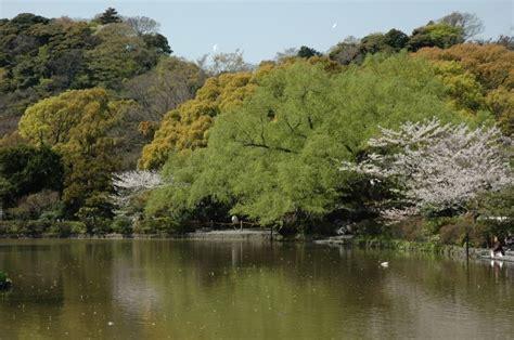 giardini mondo tsurugaoka 187 kamakura 187 giappone giardini mondo