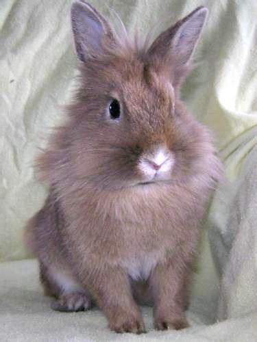 house rabbit network house rabbit network petfinder foundation