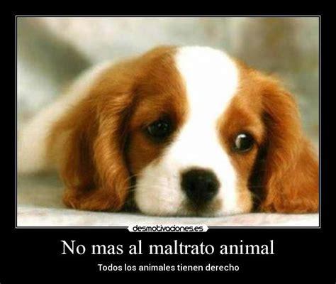 no maltrato animal no mas al maltrato animal desmotivaciones