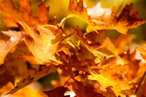colored definition high definition colored fresh air smells yellow leaves