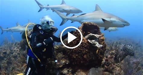 imagenes impresionantes de tiburones impresionante buceo con tiburones en jardines de la reina