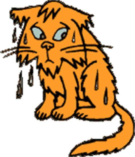 imagenes gif estudiando gif gato mojado empapado calado gifs e im 225 genes animadas