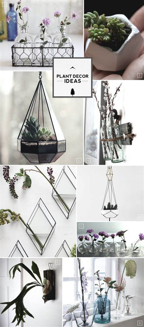 and stylish plant decor ideas home tree atlas