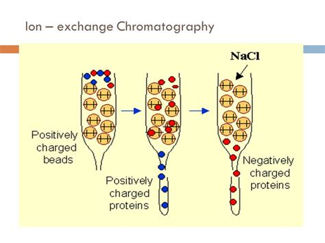 1 protein exchange chromatography for protein purification 1 ppt