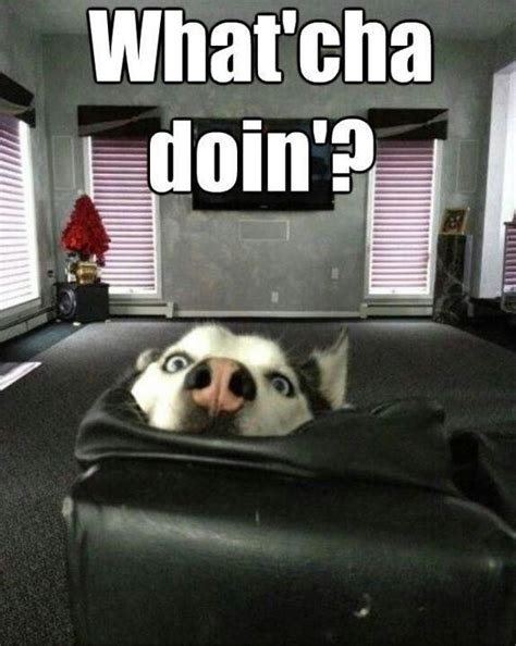 Whatcha Doin Meme - what cha doing cute animals pinterest