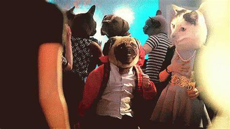 workaholics pug pug gif pug discover gifs