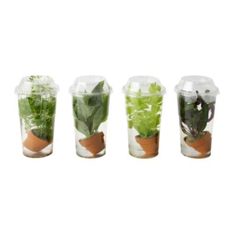 Plants In Water Vase by Vattenrall Water Plant Can Be Used For Aquariums And