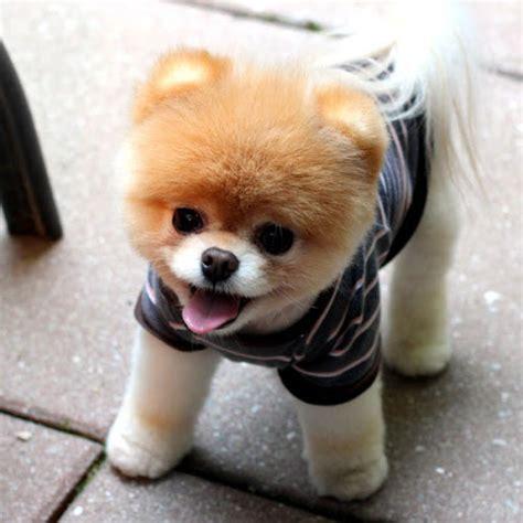 foto anjing  imutnya kebangetan glmour gallery