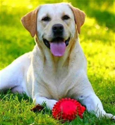 friendliest dogs motorhome hire holidays that are pet friendly