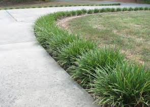 Landscape Edging Next To Sidewalk The Monkey Grass Lined Pathway Monkey Grass