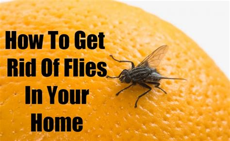 how to get rid of flies in your home diy home things