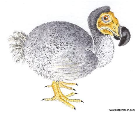 the dodo dodo birds small prints coloured etching print by artist debby