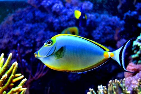 what color are fish top 50 beautiful fish facts photos colorful wallpapers