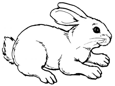 Rabbits Coloring Pages Realistic Realistic Coloring Pages Rabbit Color Pages